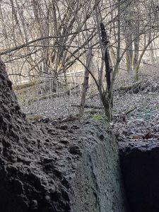 Concamo - into the woods